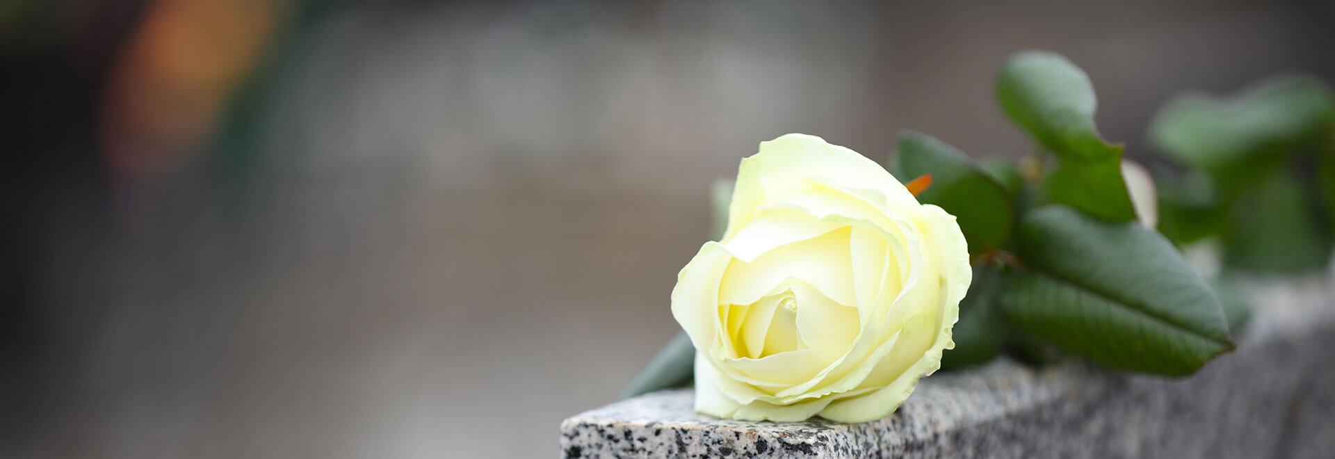 Eine liegende Rose